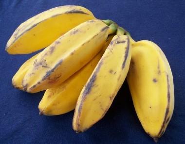 saba banana